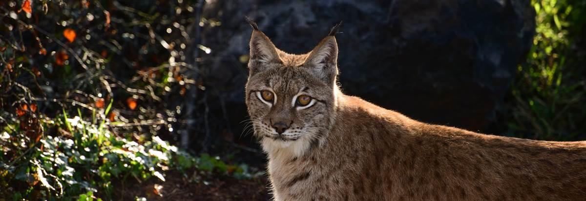 roar explore wild ireland