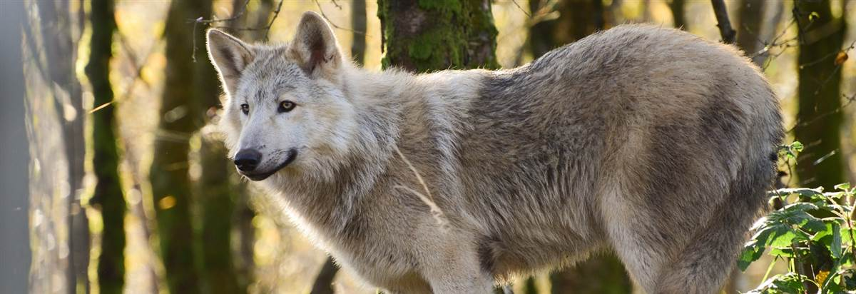 roar explore wild ireland redcastle