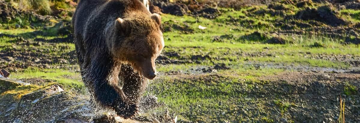 Roar explore wildireland redcastle