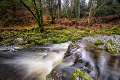 16531 Game of Thrones  Tollymore Forest