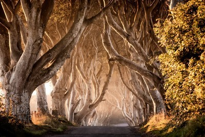 32291 Game of Thrones  The Dark Hedges