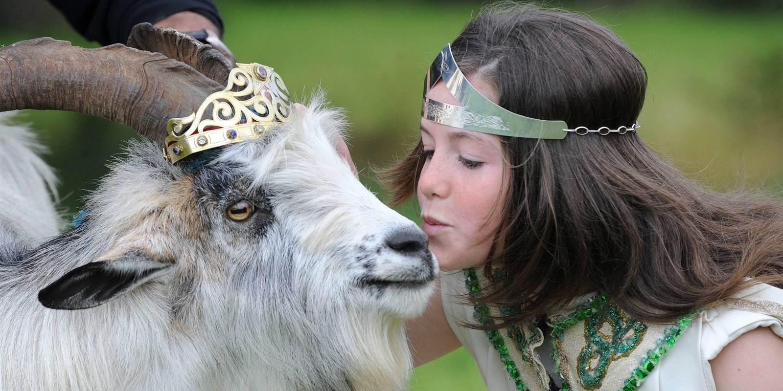 Puck Fair Queen Kissing Goat