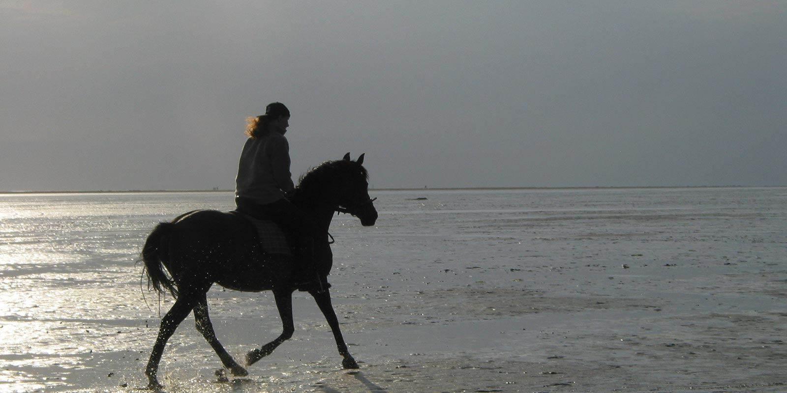 Sneem Horseriding