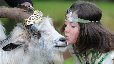 Puck Fair Queen Kissing Goat