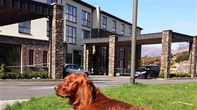 Sneem Hotel Dog