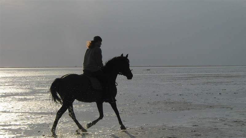 Horse Riding Sneem