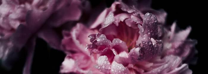 Sneem Flowers
