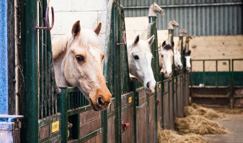 Keash Equestrian Centre