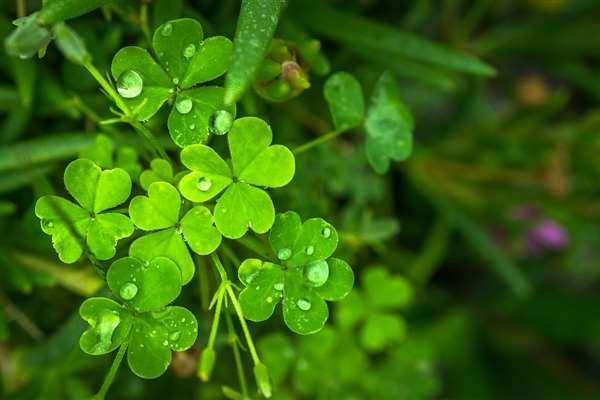 St Patricks Day Irish Castle Stay