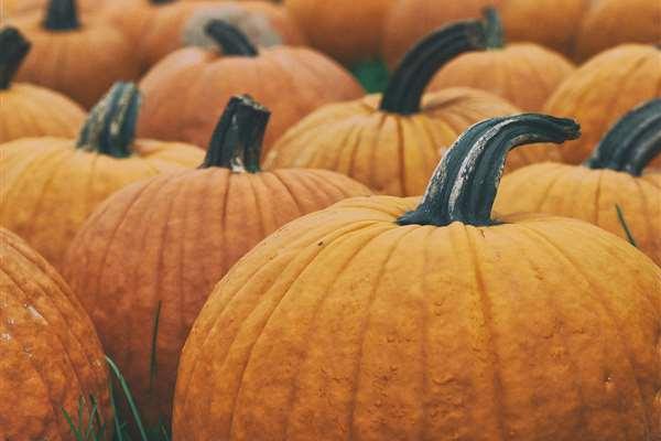 pumpkins 1868stock