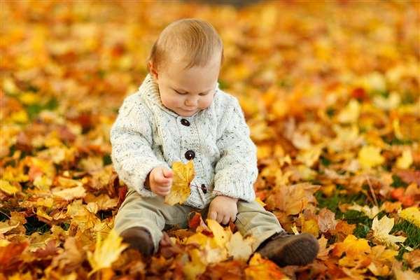 autumn 1651stock